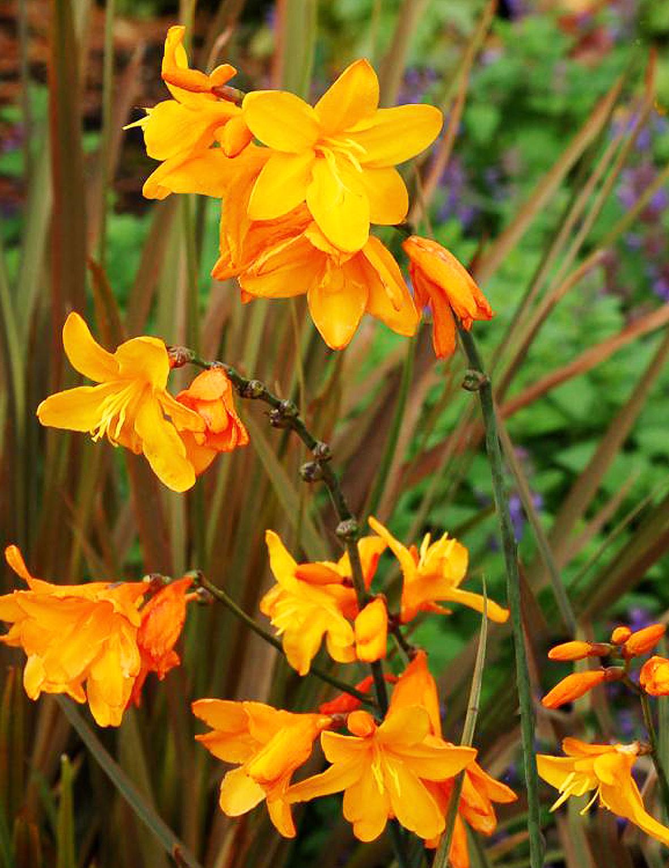 Комнатный Цветок  Комнатные цветы и растения фото и